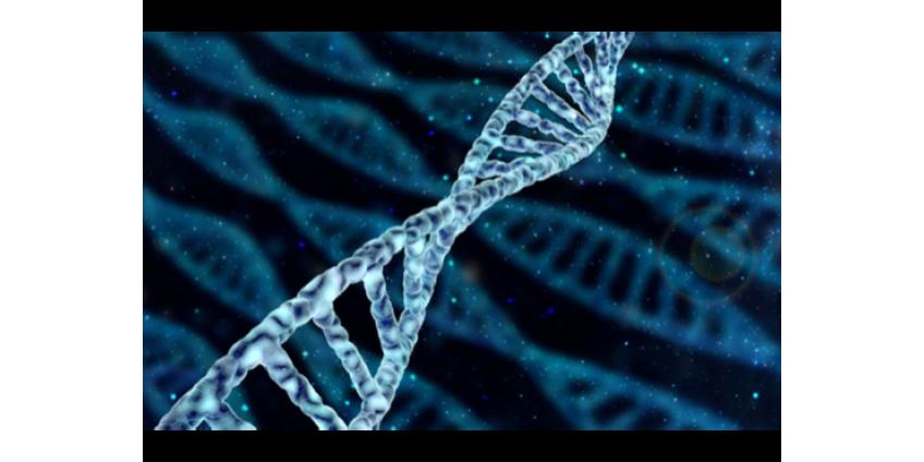 Первые результаты испытания генной терапии фенилкетонурии выглядят обнадеживающими